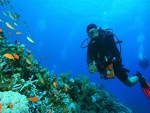 One-Hour Busselton Jetty Dive for One ($35), Two ($69) or Four People ($135) with Cape Dive (Up to $280 Value)